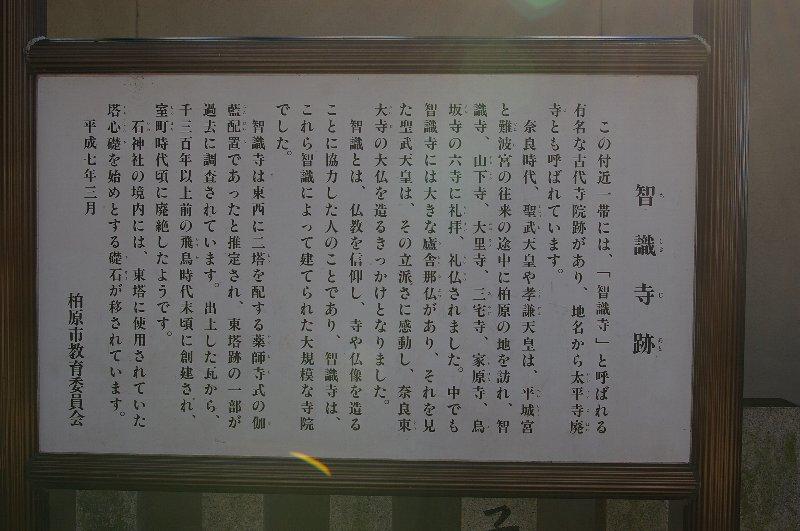 高安山麓坂ポタ6/今日は、しらなんだ〜の連発