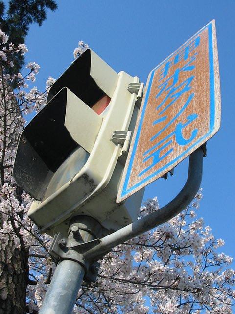 桜と青空と信号機