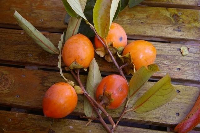 熟した渋柿のお味見は・・・