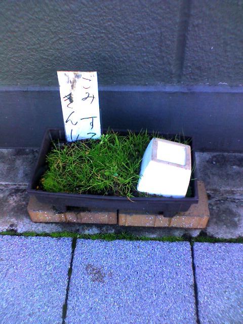 きんし盆栽