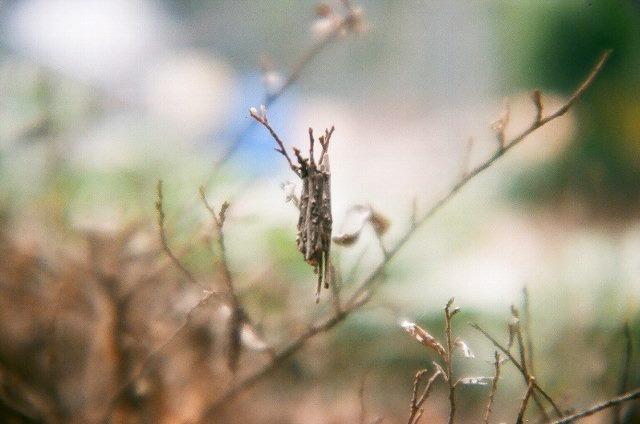 蓑虫遭遇比率