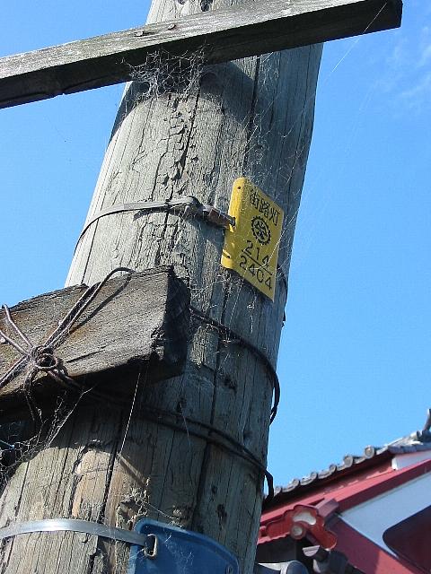 蜘蛛はる木電柱