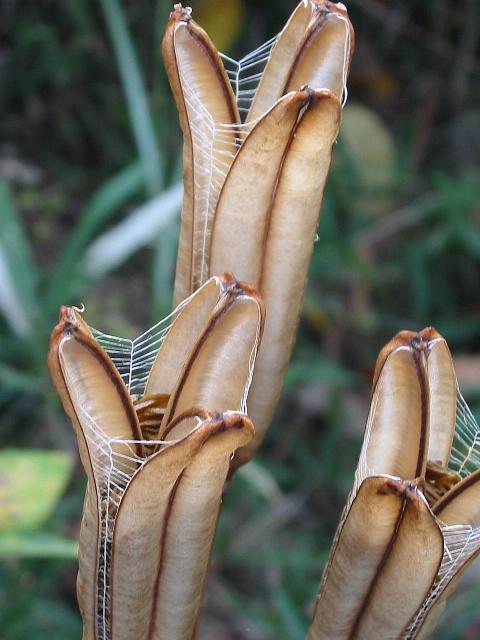 サンドオームな百合の種