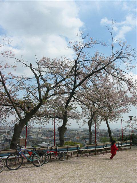 阪急小林/宝塚神社の桜